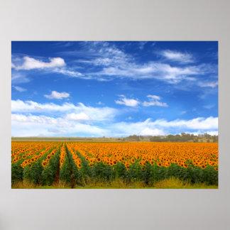 Sunflower Fields - Poster