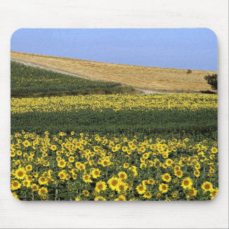 Sunflower fields, Tuscany, Italy Mouse Pad