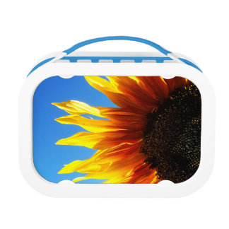 Sunflower Flames Lunch Boxes
