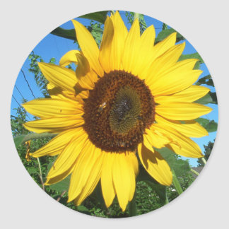 Sunflower Giant Round Sticker | Bright Yellow Blue