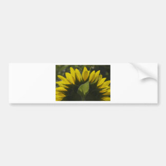 Sunflower glow bumper sticker