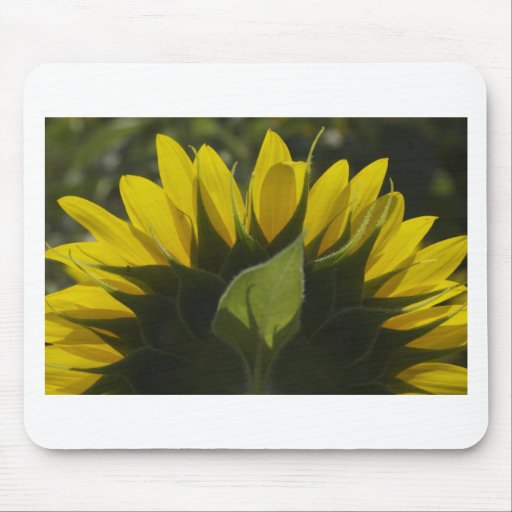 Sunflower glow mouse pad