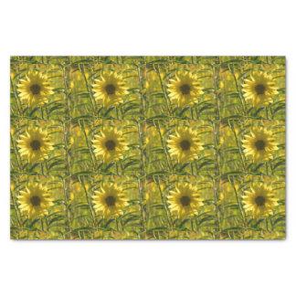 Sunflower Glow Tissue Paper