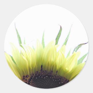 Sunflower good morning sticker