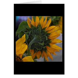 Sunflower Haze Card