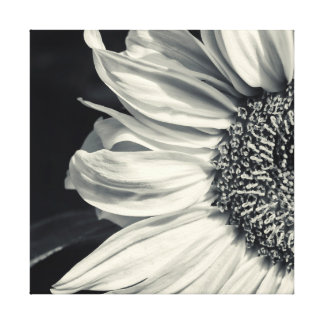 Sunflower in black-and-white on canvas