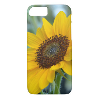 Sunflower in Bloom iPhone 7 Case