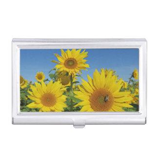 sunflower in blue sky colorful summer blossom business card holder