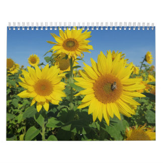 sunflower in blue sky colorful summer blossom wall calendars