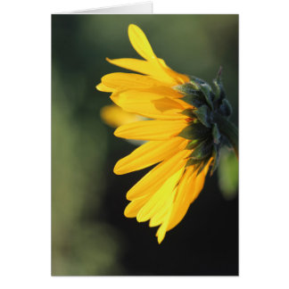 Sunflower in Profile Card