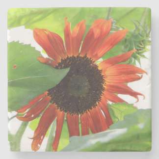 Sunflower in the Afternoon Stone Coaster