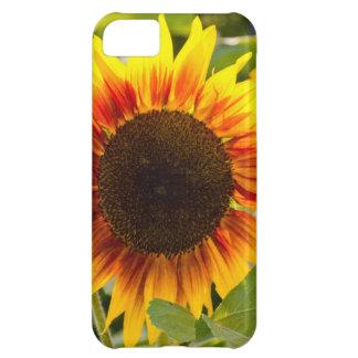 Sunflower iPhone 5C Cases