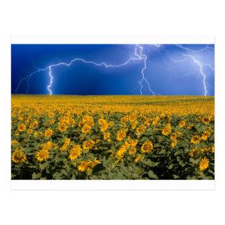 Sunflower Lightning Field Postcard