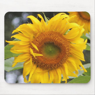 Sunflower Mouse Pad Design Five