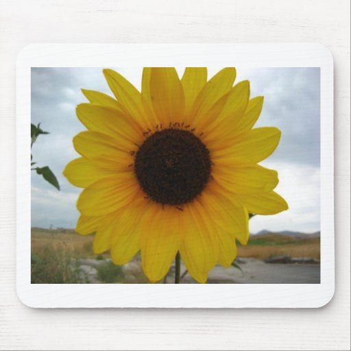 sunflower mouse mat