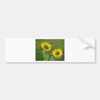 Sunflower Mug Bumper Sticker