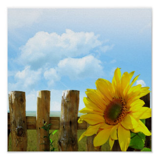 Sunflower Nature Beauty Poster