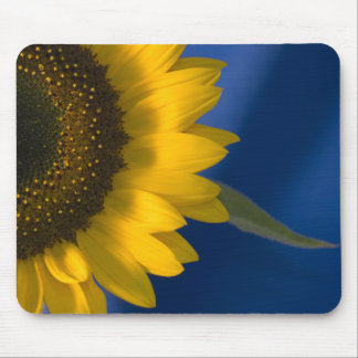 Sunflower on Blue Mousepad