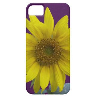Sunflower on Purple iPhone 5 Case
