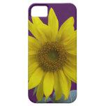Sunflower on Purple iPhone 5 Cases