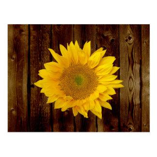 Sunflower on Vintage Barn Wood Country Postcard