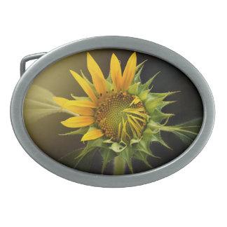 Sunflower Opening in Full Bloom Oval Belt Buckle