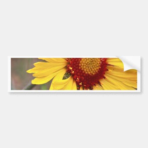 Sunflower Perfect Bumper Stickers
