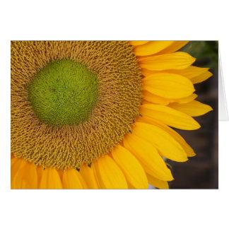Sunflower Petals Flower Photography Card