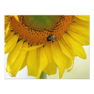 Sunflower Photo Print Design #1