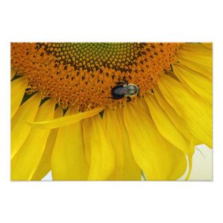 Sunflower Photo Print Design Three