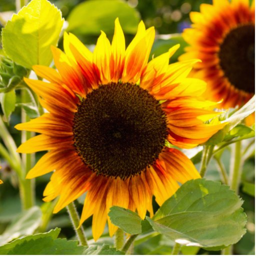 Sunflower Photo Sculpture