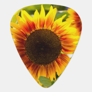 Sunflower Pick