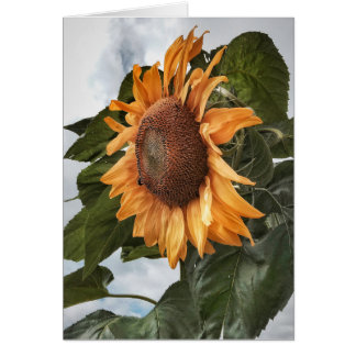 Sunflower Power Birthday Card
