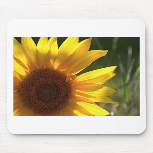 Sunflower Power! Mouse Pad