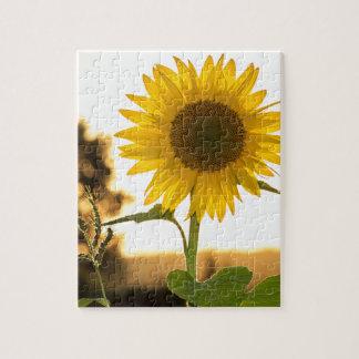 sunflower puzzles