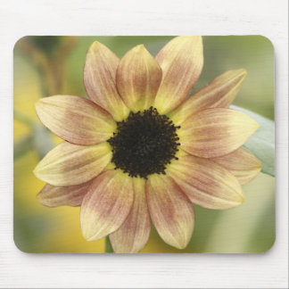 Sunflower Rust Mouse Pad