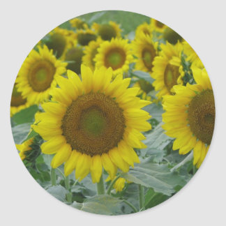 Sunflower series classic round sticker