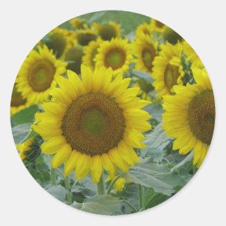 Sunflower series round sticker
