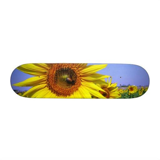 Sunflower Skate Boards