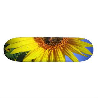 Sunflower Skateboards