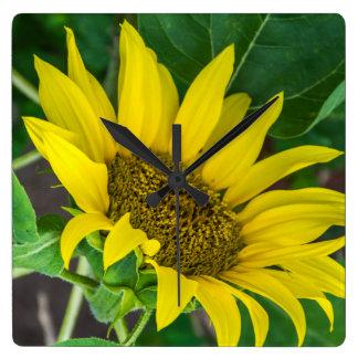 Sunflower square wall clock