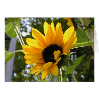 Sunflower @ The Children's Garden Card