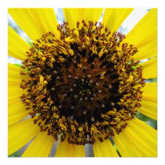 Sunflower Up Close Photograph Print