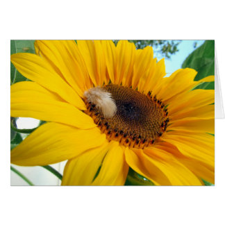 Sunflower with Feather Greeting Card