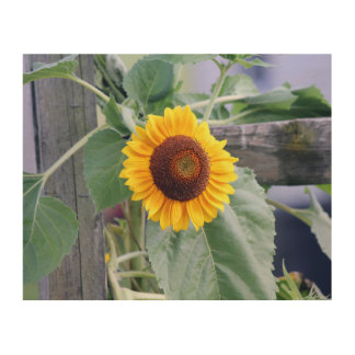 sunflower wood wall art