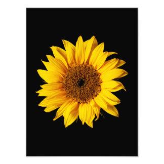 Sunflower Yellow on Black - Customized Sun Flowers Art Photo