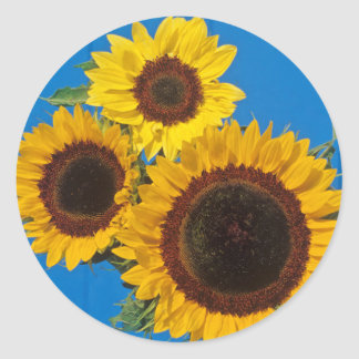 Sunflowers against blue fence round sticker