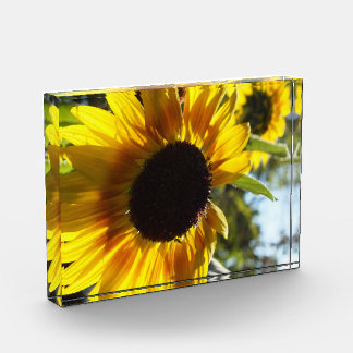 Sunflowers: Alive and Free Photo in Acrylic