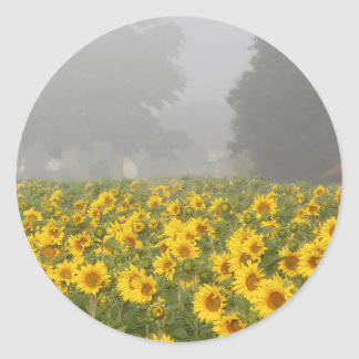 Sunflowers and Mist Classic Round Sticker