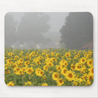 Sunflowers and Mist Mouse Pad